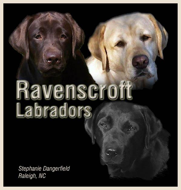 Ravenscroft Labradors - English Type Labrador Breeder in